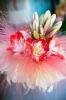 KVĚTINOVÁ DEKORACE - aranžování květin